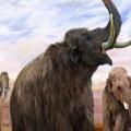 22jan2014---a-exposicao-explora-os-misterios-da-era-do-gelo-e-revela-como-era-a-vida-para-os-mamiferos-mais-iconicos-da-epoca-os-mamutes-e-os-mastodontes-1390388006986_615x470