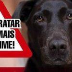 Acadêmico da UFAM é apontado como principal suspeito envenenar cachorro dentro do Campus